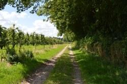 Sentier du Corainon